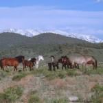 Wild Horses. Photo: Ivana Crone